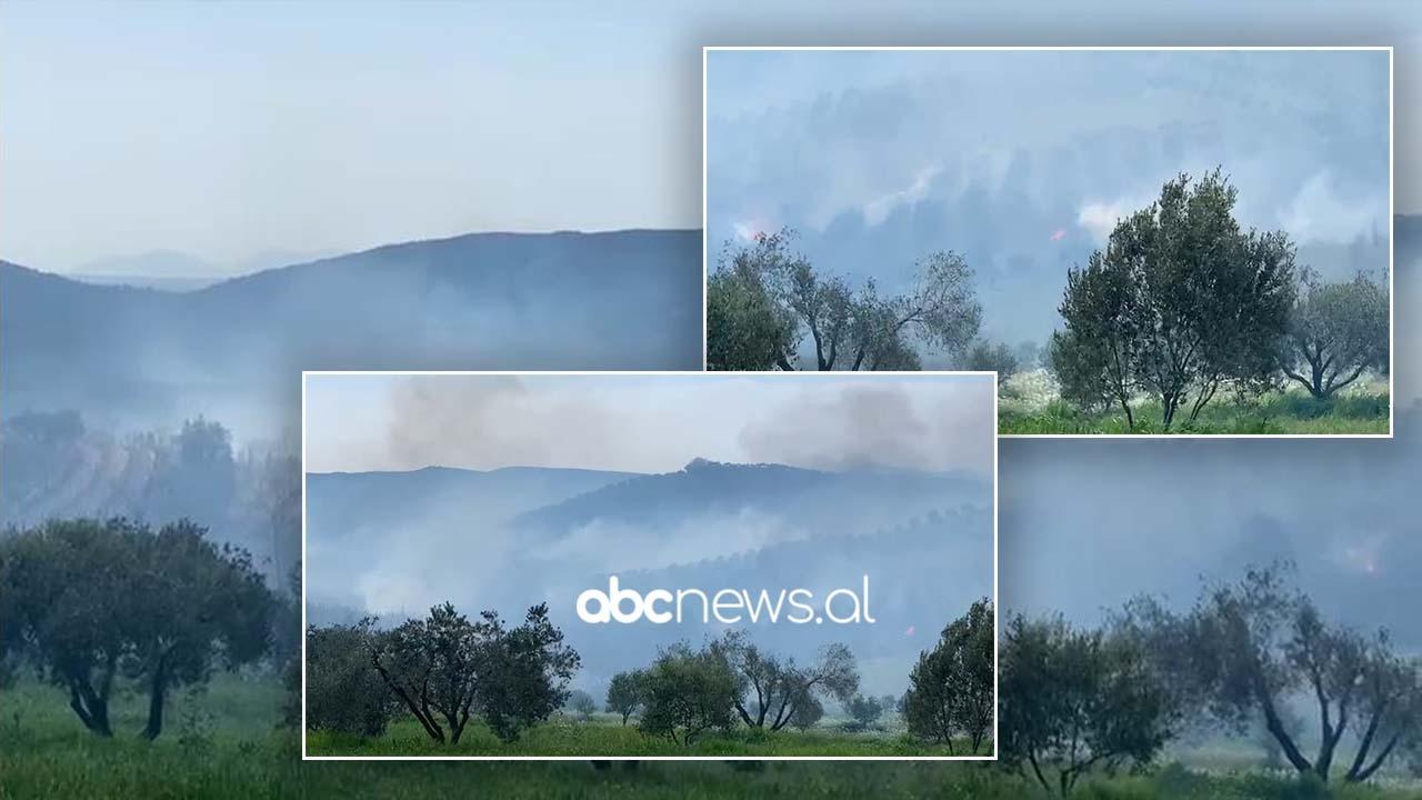 Zjarr në parcelat me ullinj në kodrat e fshatit Zhupan në Fier