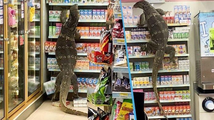 Hardhuca gjigante ngjitet në raftet e supermarketit në kërkim të ushqimit