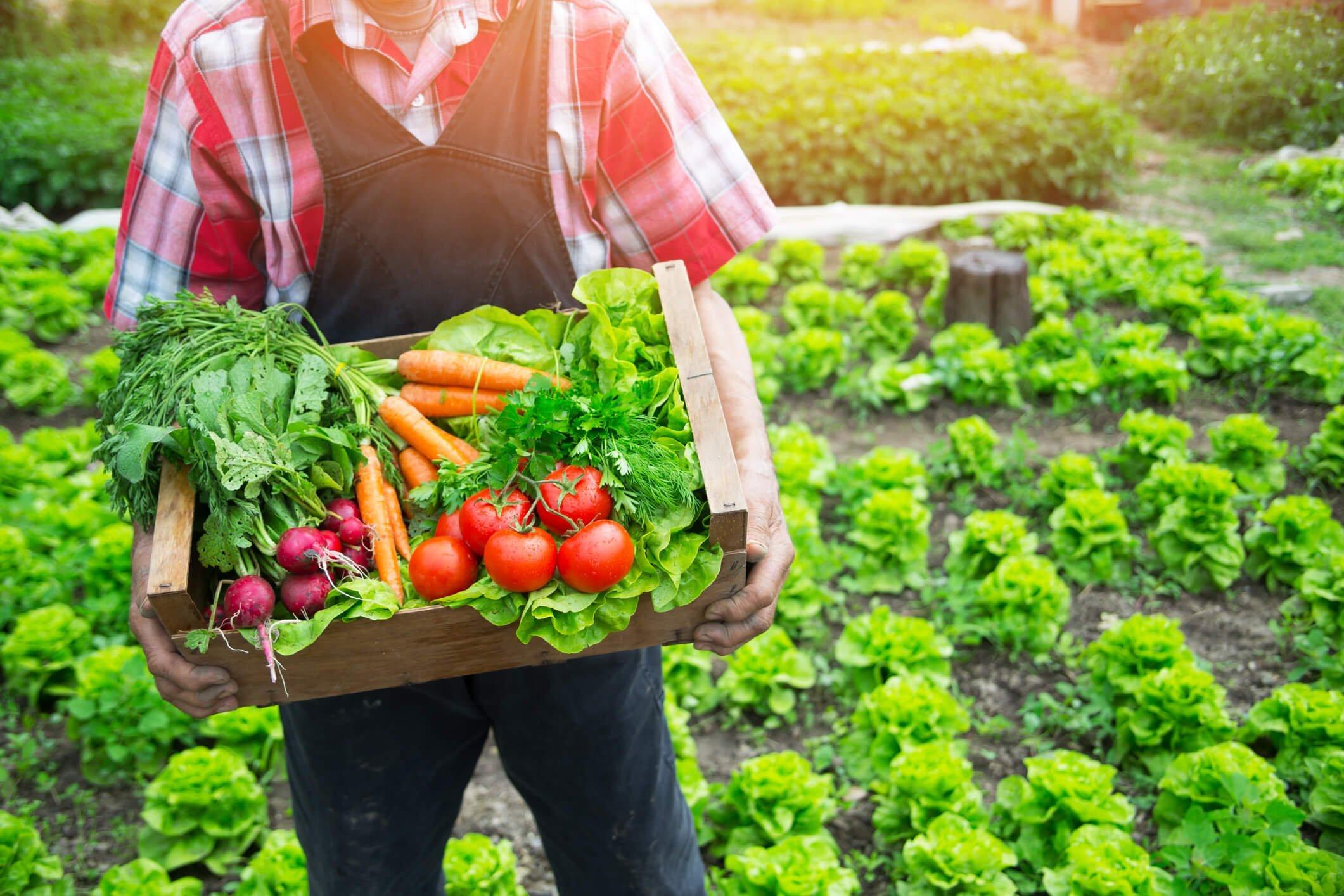 A po ju shëndoshë ushqimi organik?