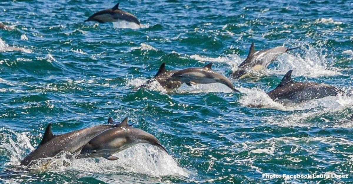 VIDEO/ 1.000 delfinë dhurojnë spektaklin e rrallë për turistët