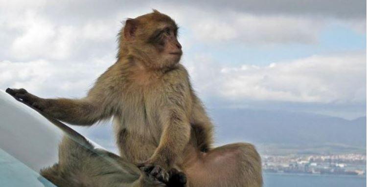 25 majmunë arratisen nga kopshti zoologjik, policia u bën thirrje njerëzve: Mbani distancë