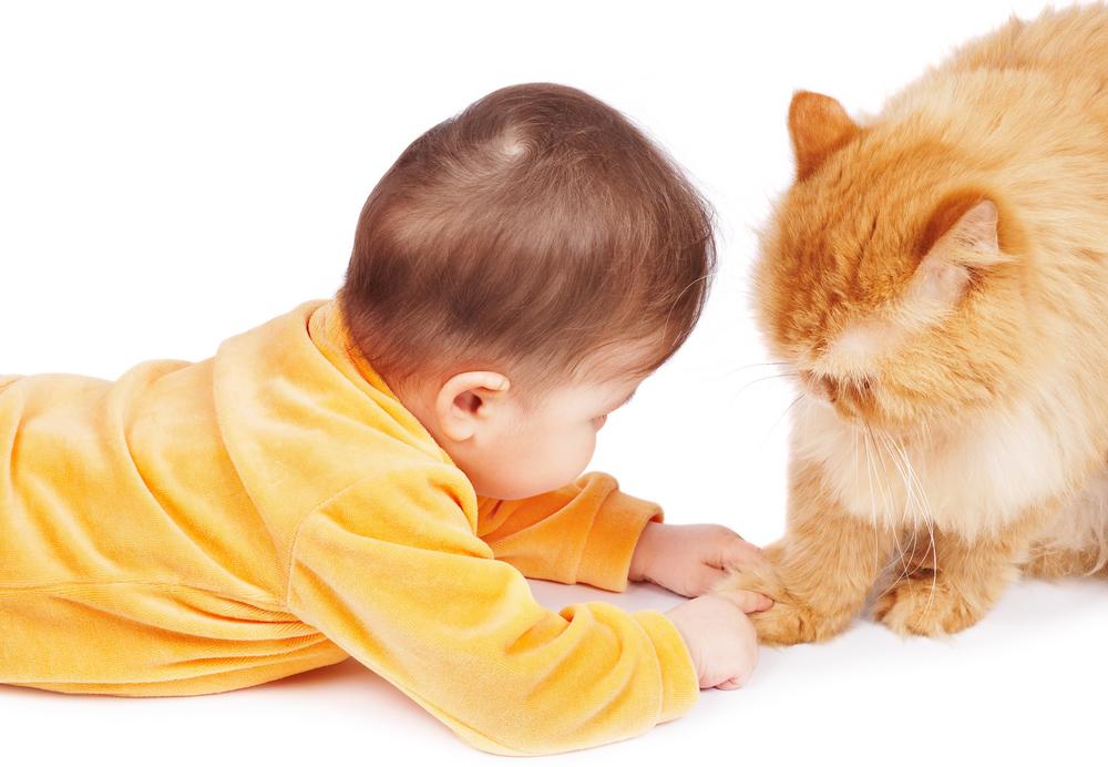 Bebet dhe macet: A mund të jetojnë së bashku?