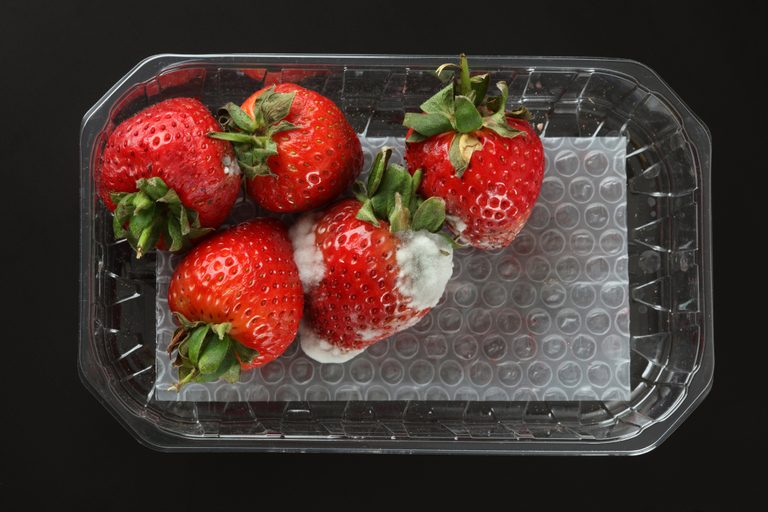 Çfarë ndodh nëse aksidentalisht hani ushqim të mykur