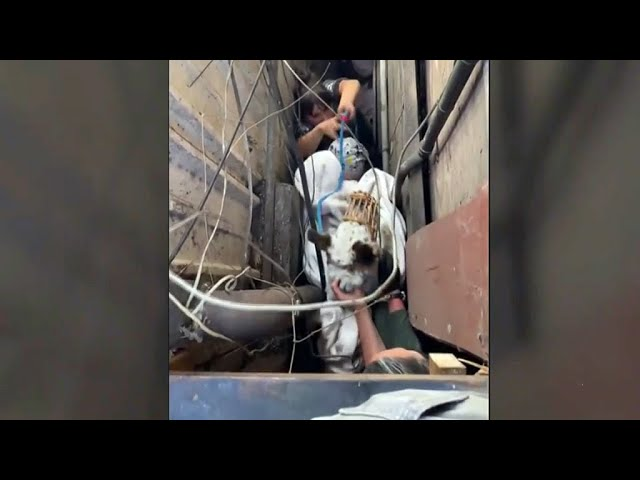 VIDEO/I bllokuar nga tubat dhe dërrasat, grupi i ekuipazhit shpëton qenin  nga hendeku i ngushtë