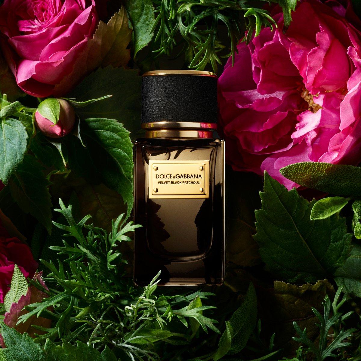 Dolce & Gabbana zgjeron koleksionin e parfumeve Velvet