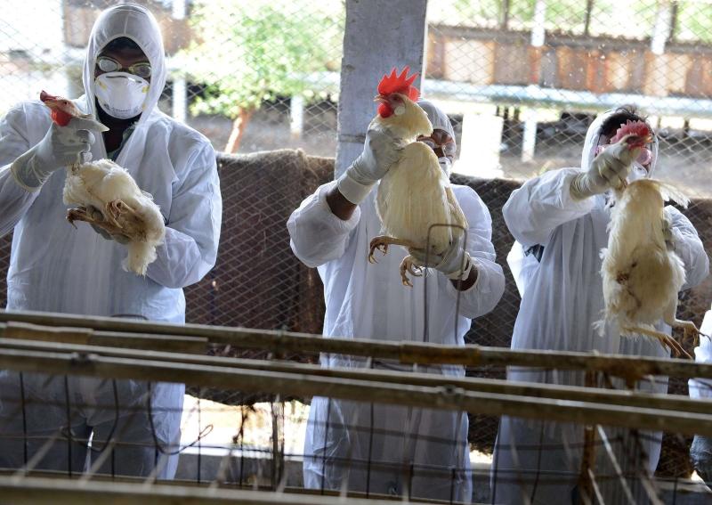Kina raporton rastin e parë me gripin e shpendëve te njerëzit