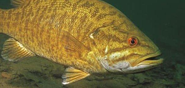 Nëse kapni këtë peshk, fitoni plot 100 mijë dollarë