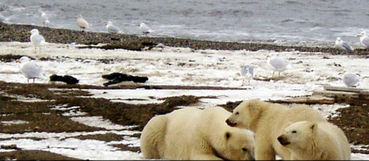 SHBA, pezullohen lejet për shpime për naftë e gaz në Arktik