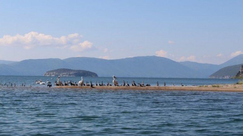 Maqedonia, Shqipëria dhe Greqia do të bashkëpunojnë për mbrojtje të Liqenit të Prespës