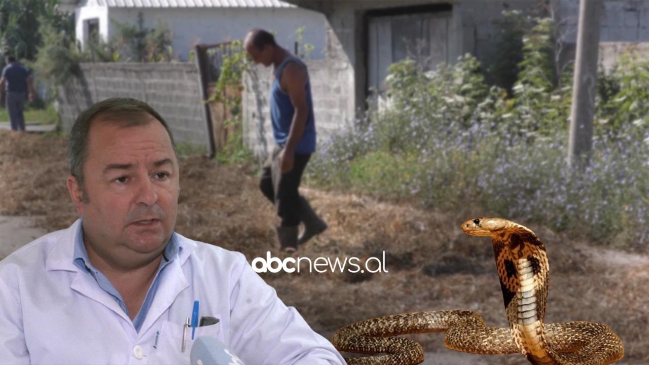 Fluks në urgjencën toksikologjike nga helmimet e gjarpërinjve