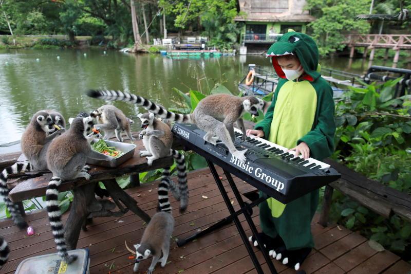Prej kohësh pa vizitorë nga Covid, 11-vjeçarja luan muzikë për kafshët në Tajlandë