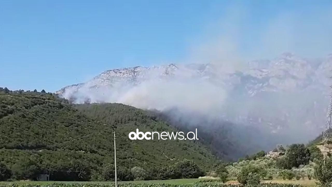 Përfshihet nga flakët pylli me pisha në Krujës, e pamundur ndërhyrja e zjarrfikësve