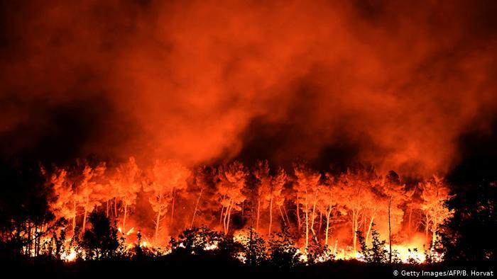 """Ndryshimet klimatike  """"djegin"""" mijëra hektarë pyje në botë"""