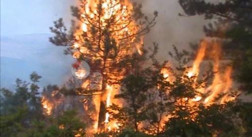 Zjarr në Vermosh, flakët favorizohen nga era, zjarrfikësja po punon për shuarjen e tij