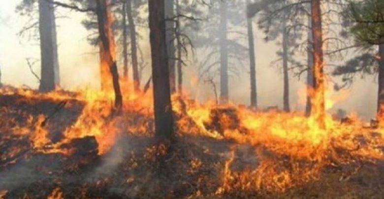 I vuri zjarrin pyllit, kapet pas disa orësh ndjekje nga policia autori në Mirditë