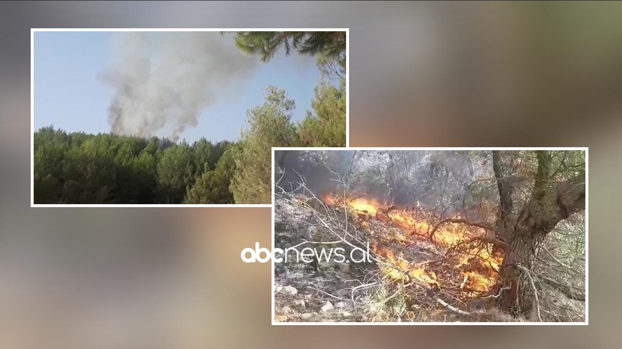 U rrezikuan 5 banesa nga flakët, kryetarja e Bashkisë Kurbin: Vatrat e zjarrit në Mamurras nën kontroll