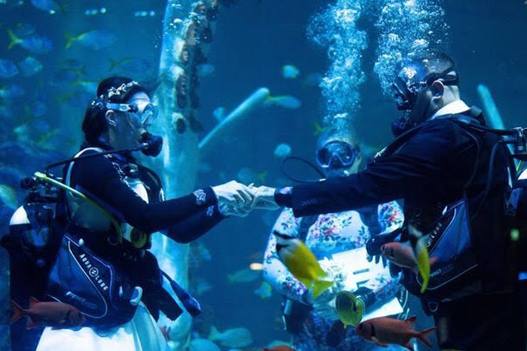 Çifti martohet nën ujë në rezervuarin me peshkaqenët e rrallë