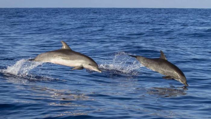 Ishte zhdukur prej 14 orësh, delfinët shpëtojnë të riun në Irlandë
