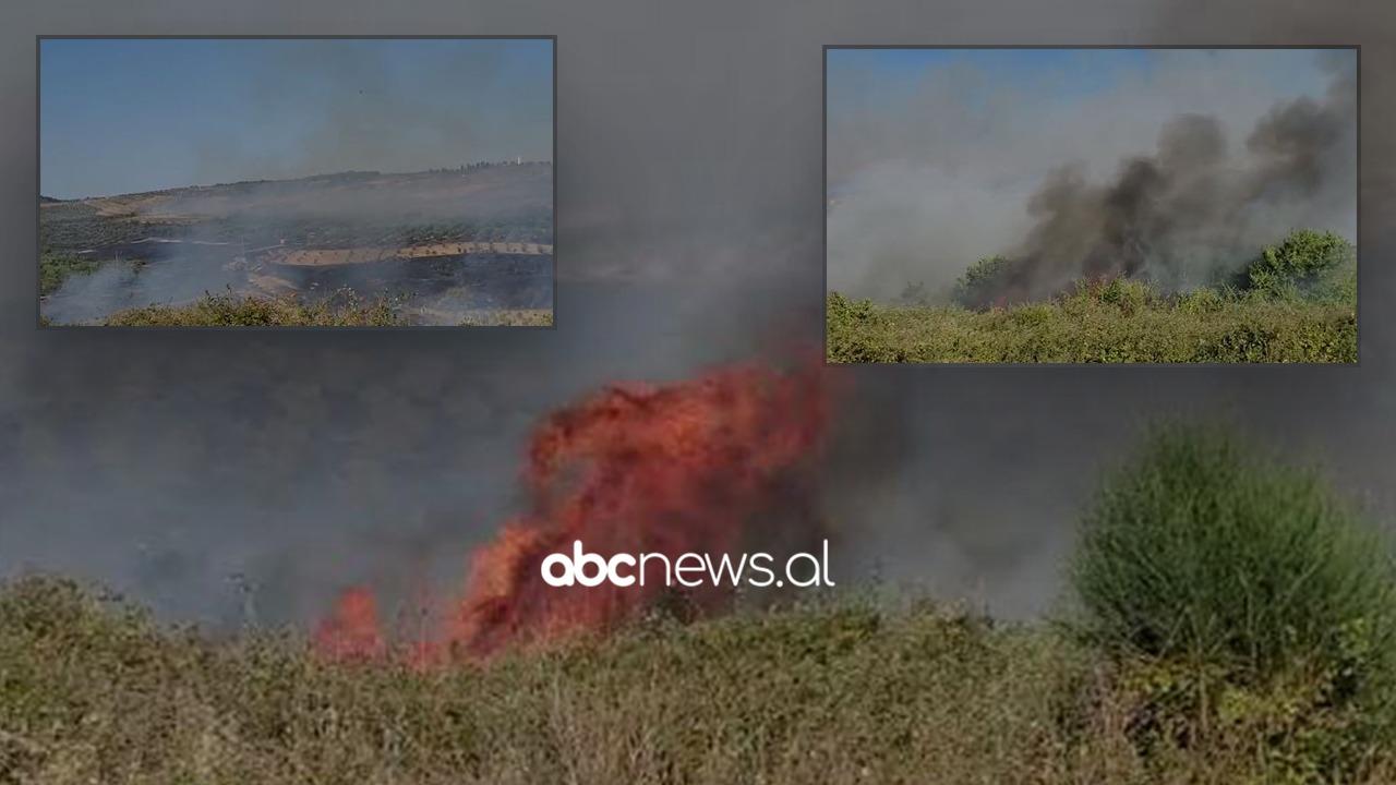 Zjarr në një parcelë me ullinj në Fier, era favorizon përhapjen e flakëve