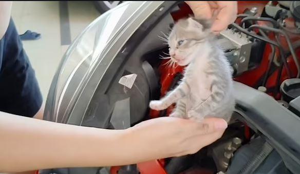 VIDEO/ Shoferi shpëton dy kotelet e bllokuara brenda motorit të makinës