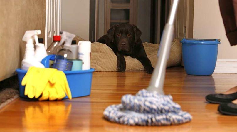 Sa shpesh duhet të pastrohen katër sende shtëpiake?