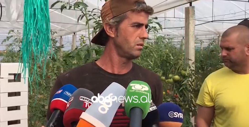 Fermerët në Roskovec protestë për farën e domates: Shteti të na dëmshpërblejë